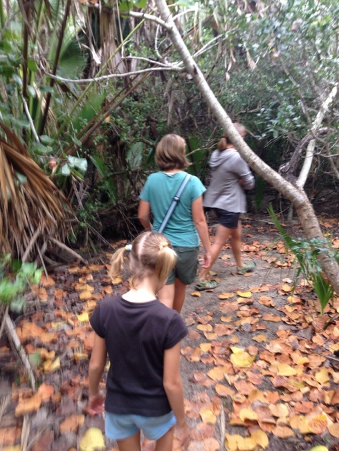 Exploring the mangroves.