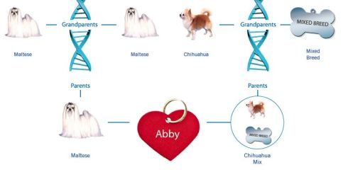 Abby mix